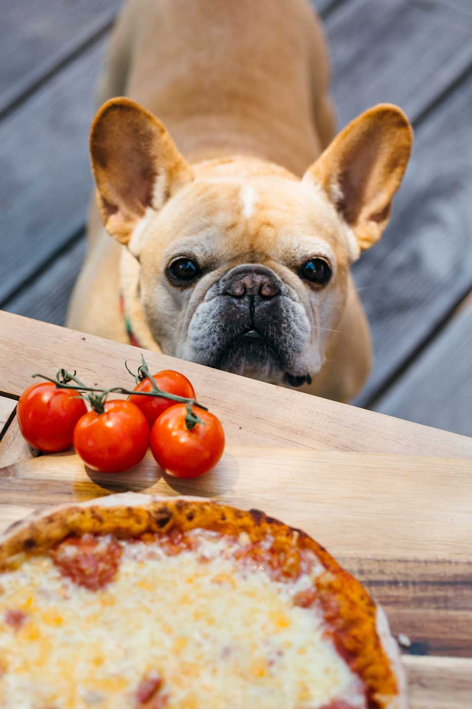 Dog Pizza